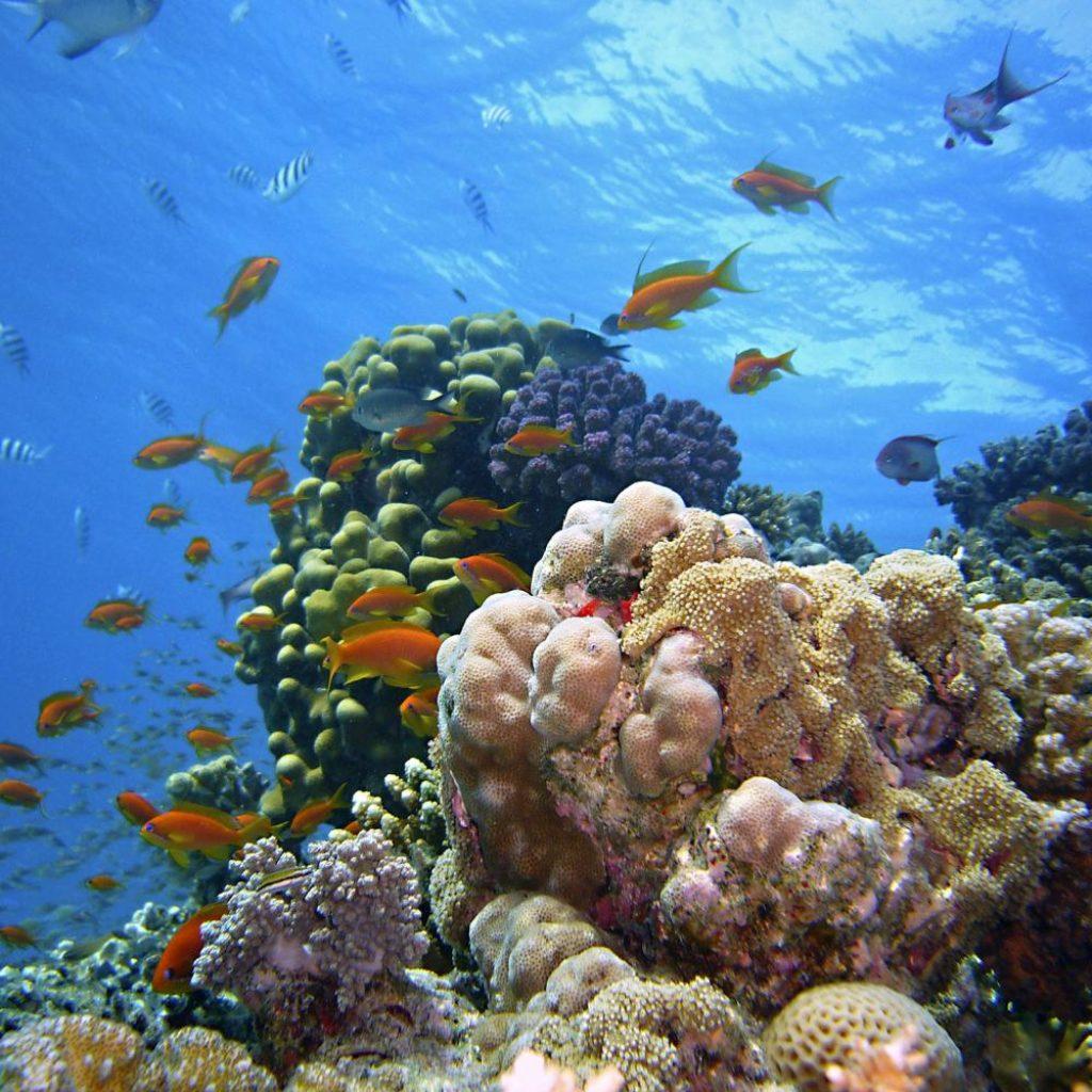 underwater-1656618_1920_pixabay